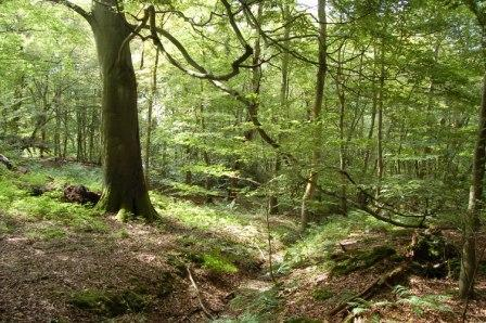More Chilterns 'rainforest' discovered